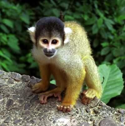 The Monkey Park